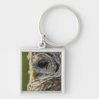 Barred Owl, Strix varia, Michigan Silver-Colored Square Key Ring