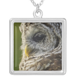 Barred Owl, Strix varia, Michigan Square Pendant Necklace