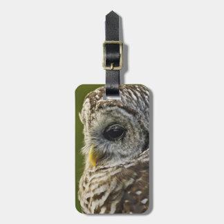 Barred Owl, Strix varia, Michigan Tag For Luggage
