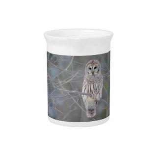 Barred Owl Strix Varia Pitcher