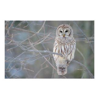 Barred Owl Strix Varia Stationery Design