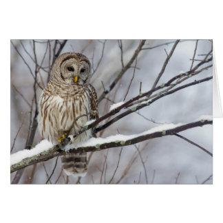 Barred Owl with a light snowfall Card