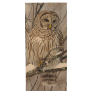 Barred Owl with a light snowfall Wood USB 2.0 Flash Drive