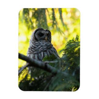 Barred Owlet Magnet