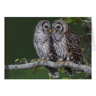 Barred Owls Card