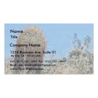 Barrel Cactus A Cactus In Anza Borrego Desert Cact Business Cards