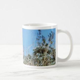 Barrel Cactus A Cactus In Anza Borrego Desert Cact Mug