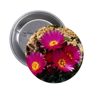 Barrel Cactus blooms Pink flowers Pin