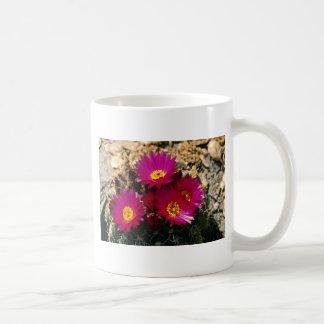 Barrel Cactus blooms Pink flowers Coffee Mugs