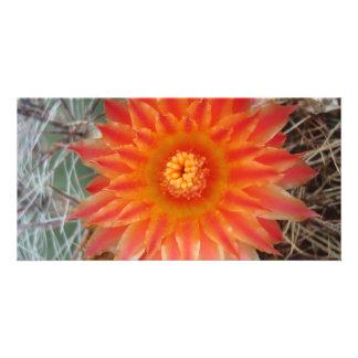 Barrel Cactus Blossoms Custom Photo Card