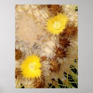 Barrel Cactus Blossoms Poster