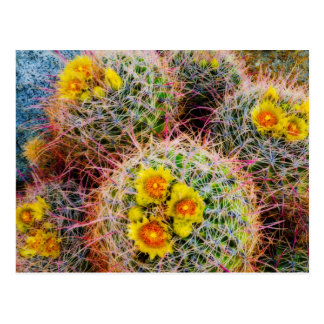 Barrel cactus close up, California Postcard