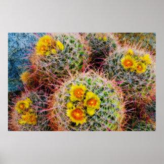 Barrel cactus close up, California Poster