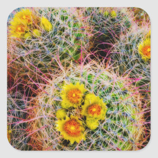 Barrel cactus close up, California Square Sticker