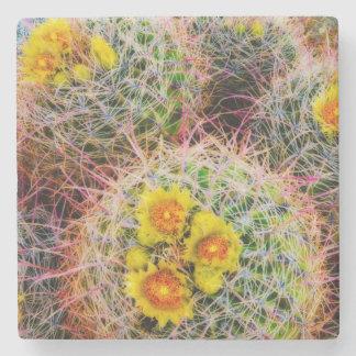 Barrel cactus close up, California Stone Beverage Coaster