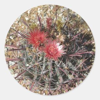 Barrel Cactus Fishhook Red Round Sticker