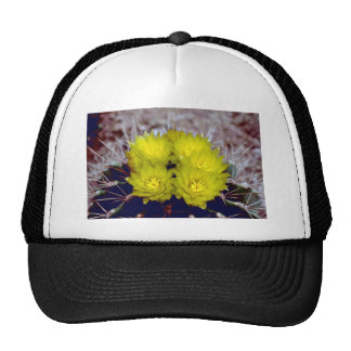 Barrel Cactus Hats