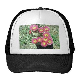 Barrel Cactus Mesh Hat