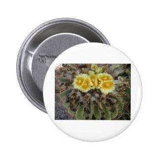 Barrel Cactus in Bloom Pinback Buttons