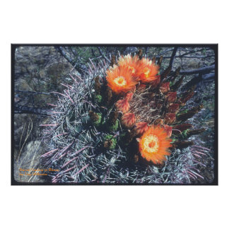 Barrel Cactus in Bloom Poster