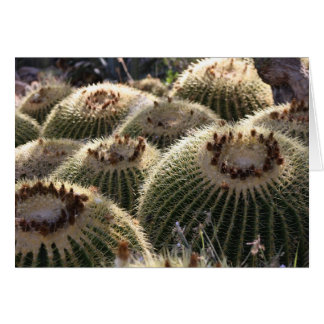 Barrel Cactus in Early Morning Light Greeting Card