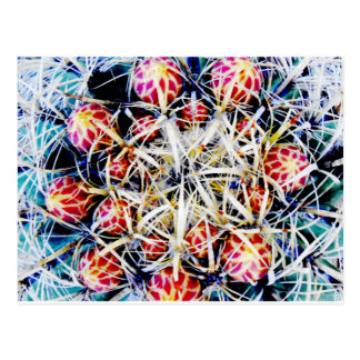 Barrel Cactus Postcard