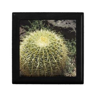 Barrel Cactus Small Square Gift Box