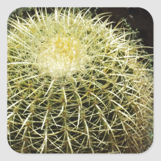 Barrel Cactus Square Sticker