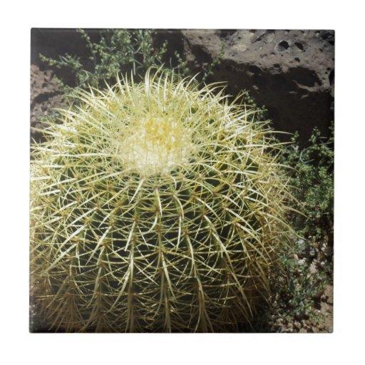 Barrel Cactus Tile
