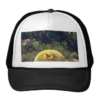 Barrel Cactus With Brothers Mesh Hats