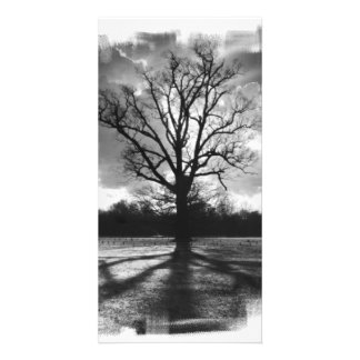 Barren Branches Tree Custom Photo Card