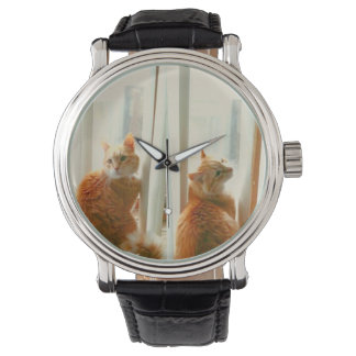 Bart the Cat Watch