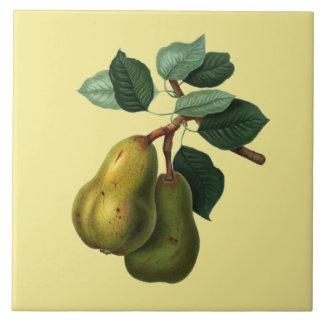 Bartlett Pears Botanical ~ Any Color Background ~ Large Square Tile