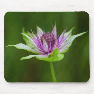 Basil Bee Balm Bergamot Wildflower Floral Mousepad