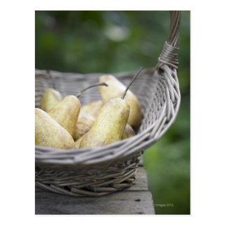 Basket of freshly picked pears postcard