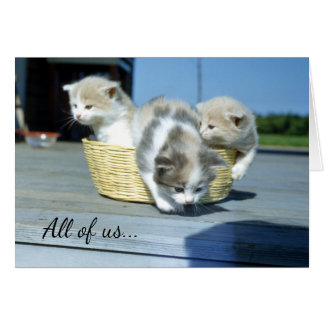 Basket of Kittens, Cute Kitty Cat Birthday Wishes Card