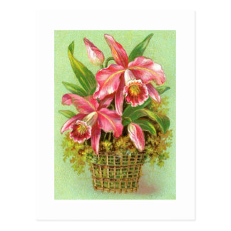 Basket of Pink Orchids Vintage Image Postcard