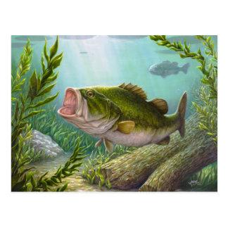 Bass Fish Postcard