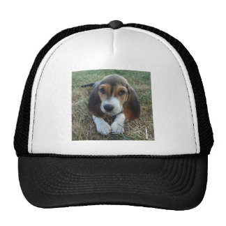 Basset Artésien Normand Puppy Dog Cap