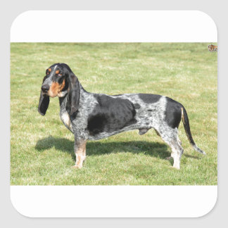 Basset Bleu de Gascogne Dog Square Sticker