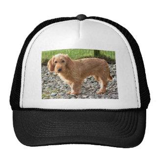 Basset Fauve de Bretagne Dog Cap
