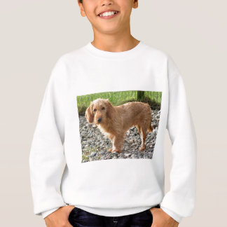 Basset Fauve de Bretagne Dog Sweatshirt
