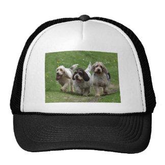 Basset Griffon Vendéen, Grand Dog Cap
