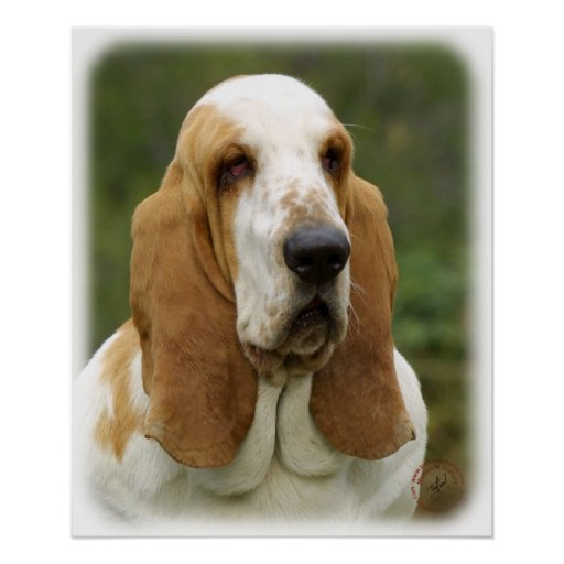Basset Hound 9P013D-30_2 Posters