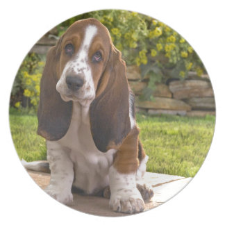 Basset Hound Dog Party Plates