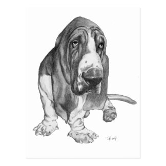Basset Hound Drawing Postcard
