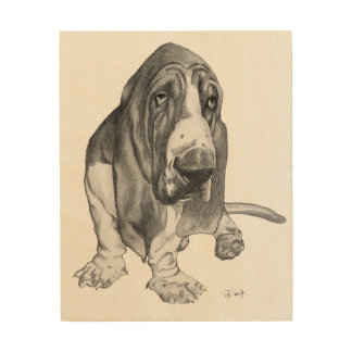 Basset Hound Drawing Wood Print