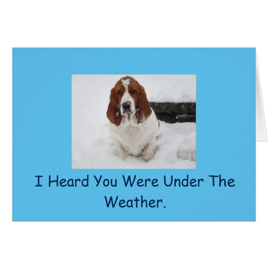 Basset Hound get well card. Card