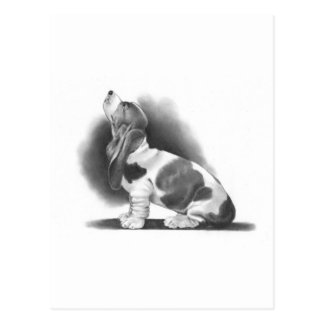 BASSET HOUND: PENCIL REALISM ART POSTCARD