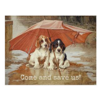 Basset hound puppies under umbrella CC0181 Trood Postcard